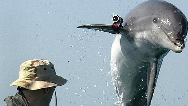 Control of the combat dolphin program is another of Russia's gains.