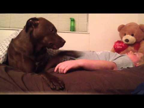 ANIMALS: Service Dog Responds to Pass Out Spell July 03