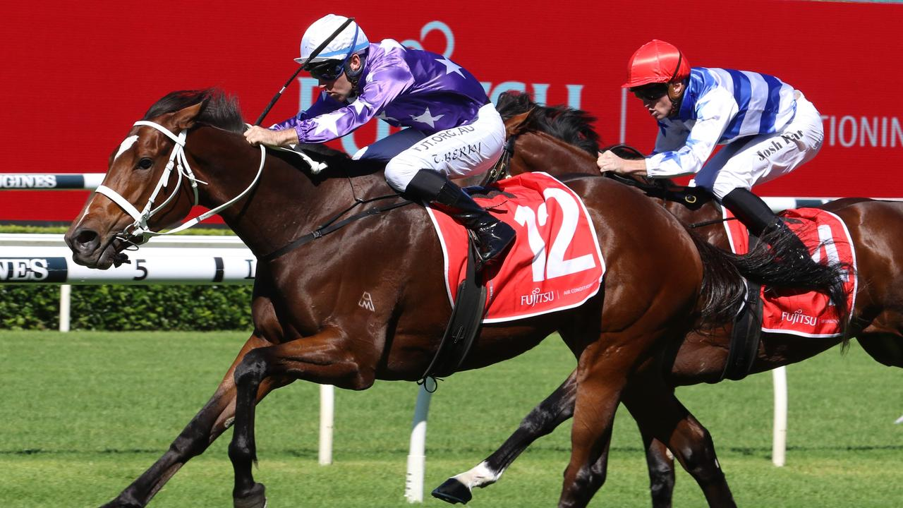 Kiku has been trialling very well ahead of his race return. Picture: Grant Guy