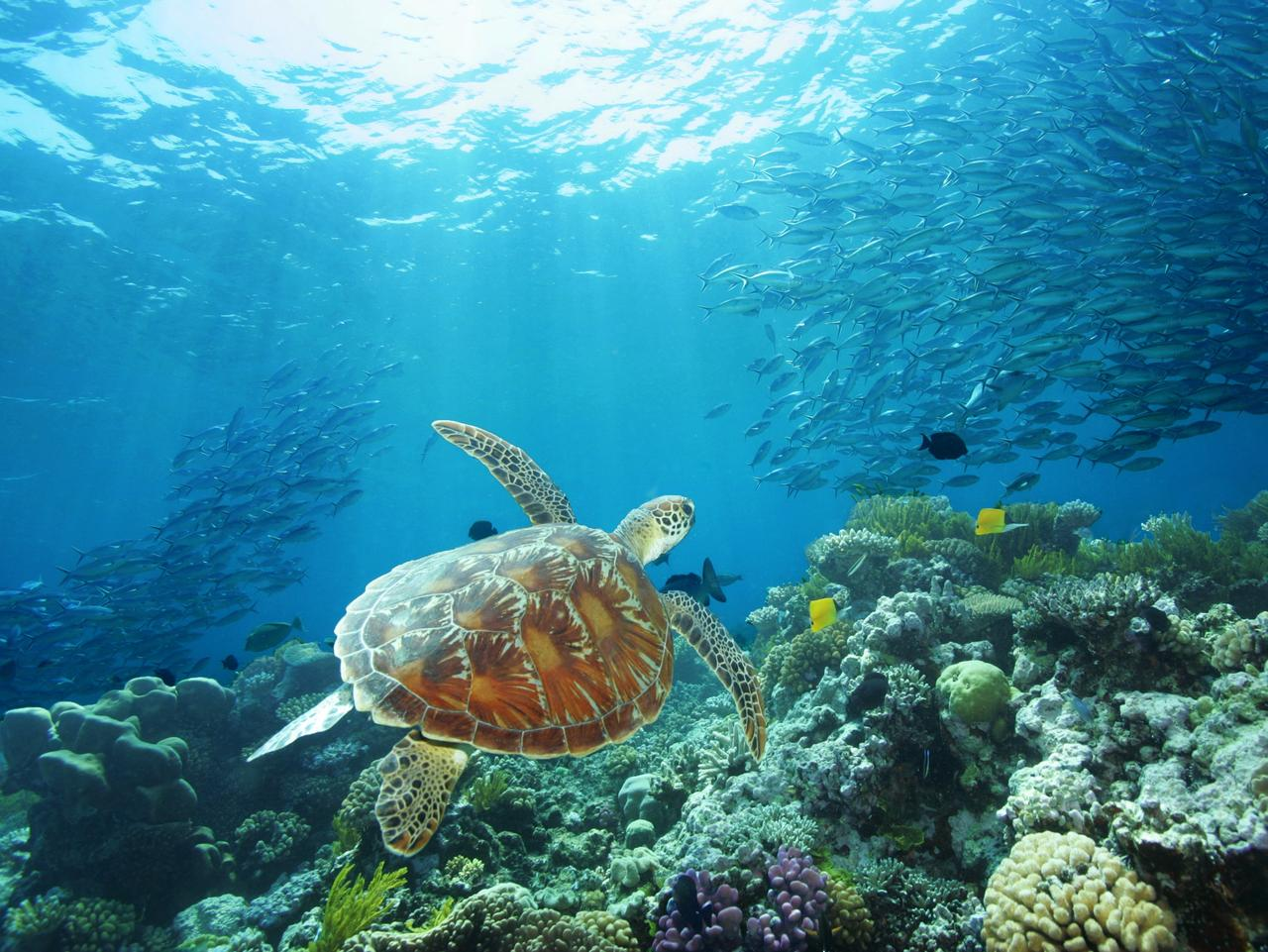 ESCAPE:  Sea Turtle, Great Barrier Reef, QLD. Picture: Tourism Port Douglas and Daintree