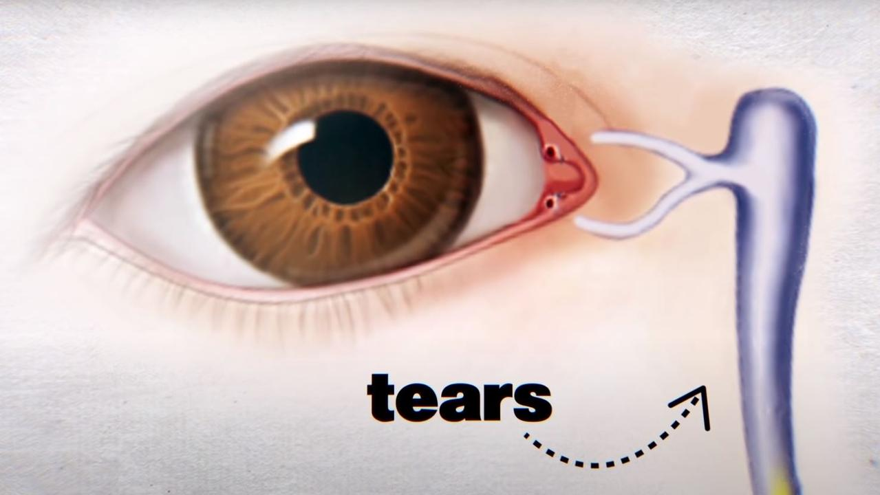 The little holes act like valves to take tears out of the eye and each time we blink, a small amount of the tears on the surface of the eye are squeezed through these holes. Picture: YouTube