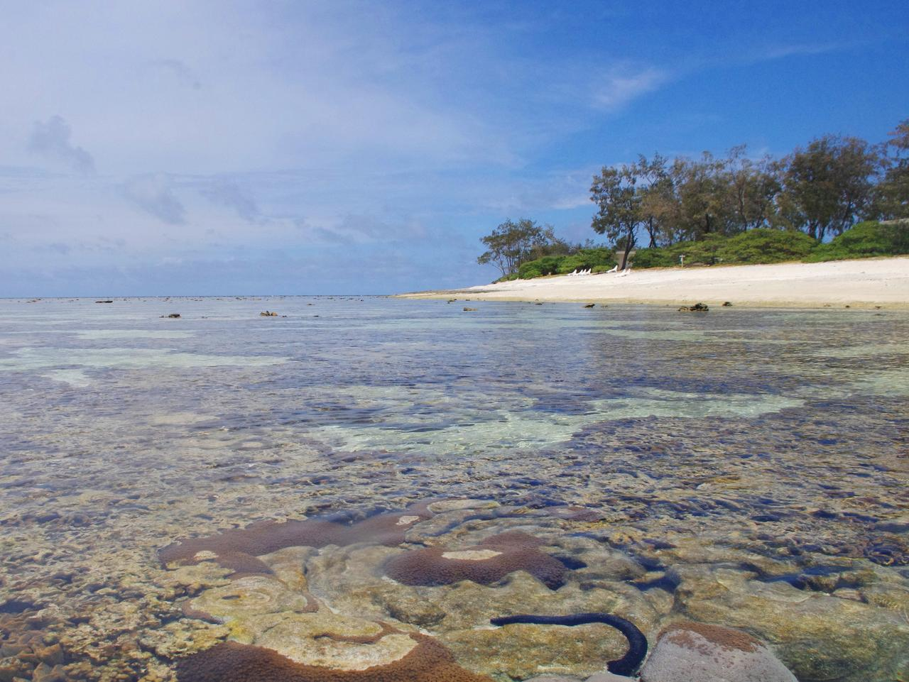 Supplied Travel Great Barrier Reef story pics