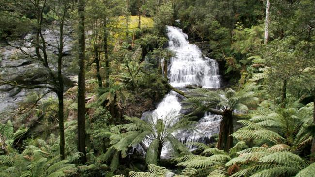 Visitors can immerse themselves in some of Australia's best rainforest scenery in the Great Otway National Park in Victoria, walking through tall trees, ancient plant life and lush ferns. These are some of the best things to do and see once you get there.