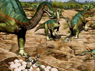 The breeding ground of a herd of the Jurassic Period Patagonian plant-eating dinosaur Mussaurus patagonicus is seen in an undated artist's rendition.  Jorge Gonzalez/Handout via REUTERS