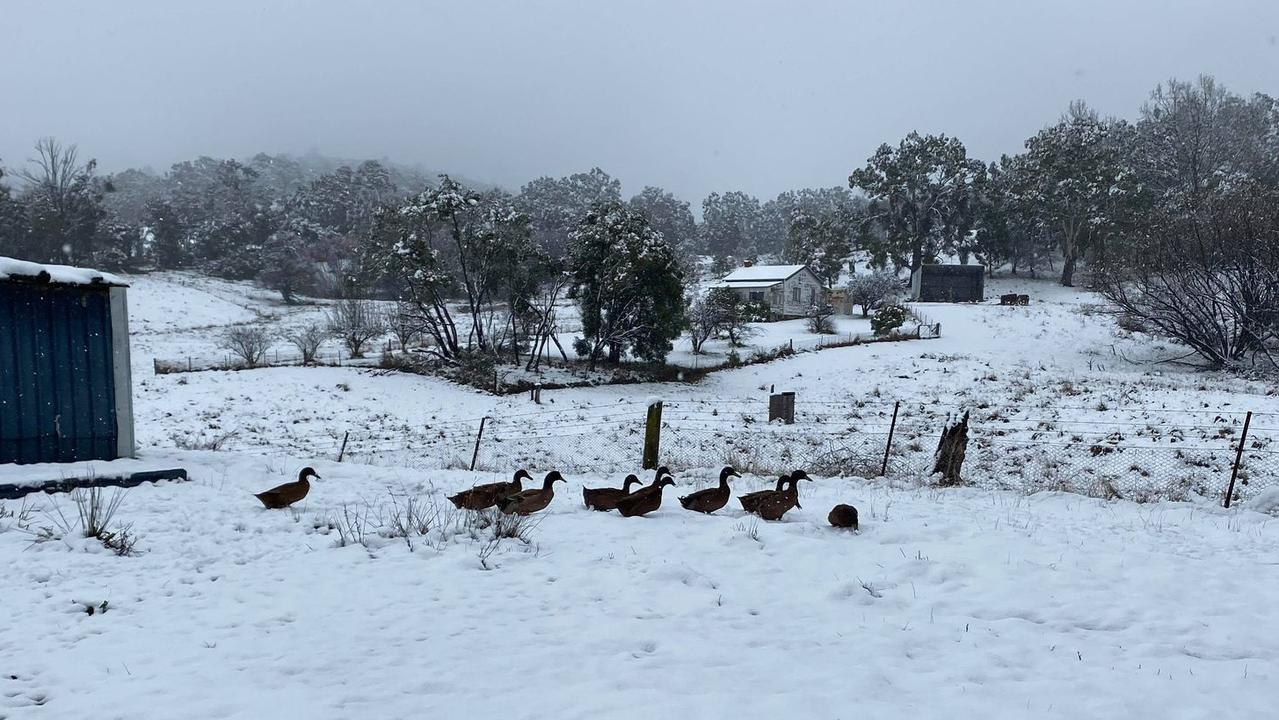 The ducks liked the now, the chickens not so much. Picture: Robert Atcheson/news.com.au