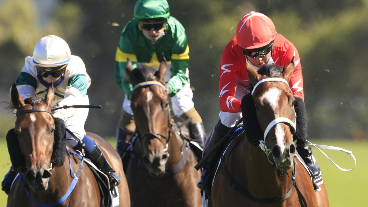 All the racing action in NSW comes from Muswellbrook and Queanbeyan on Monday.