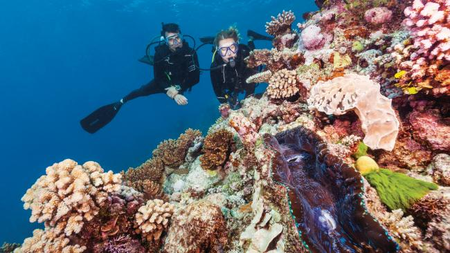 Get up close and personal with Nemo and pals when you dive down to the reef. Need help deciding? We've lined up the best Great Barrier Reef tours right here.Picture: Tourism & Events Queensland