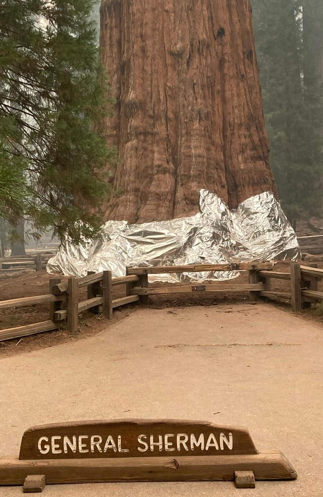 The world's biggest trees have been wrapped in fireproof blankets in an effort to protect them from huge blazes tearing through California. Picture: Handout/National Park Service/AFP