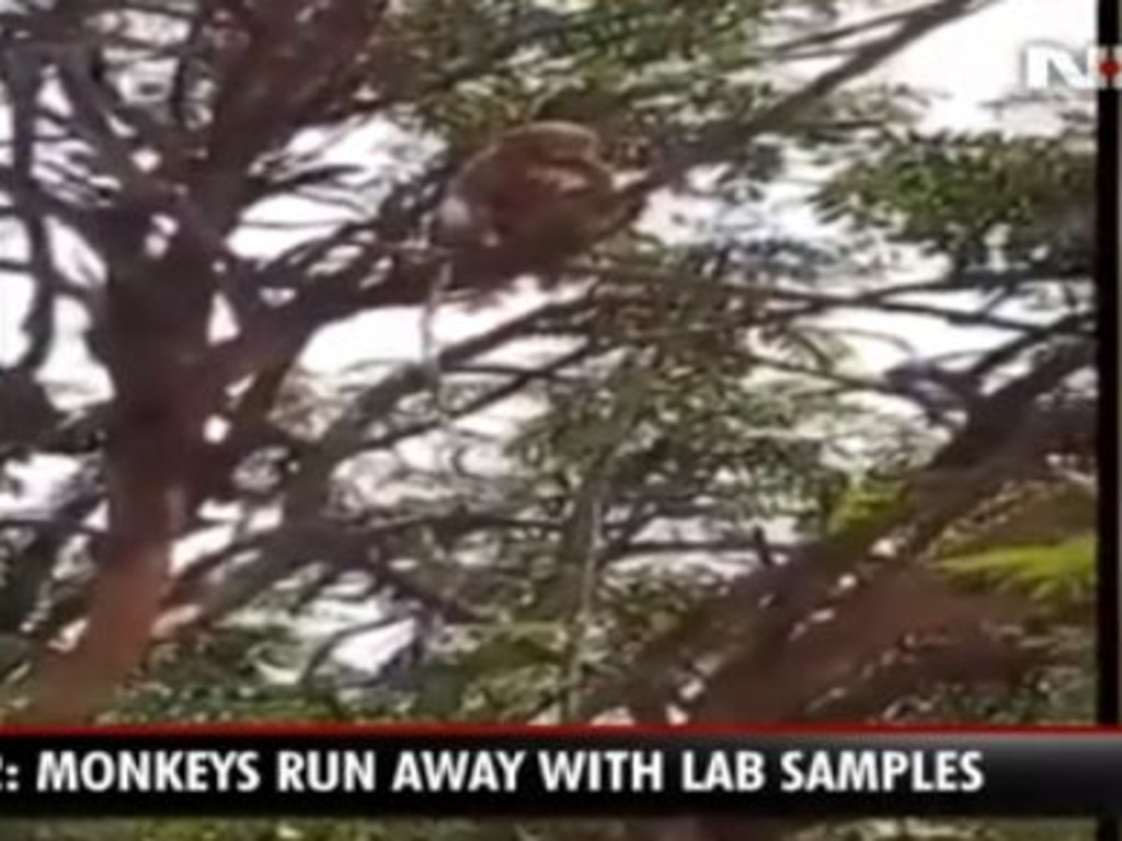 Video was widely shared showing one of the monkeys in a tree trying to eat a glove after the attack.