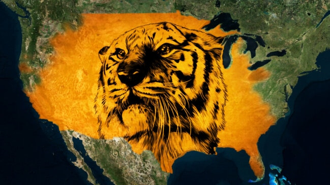 Why There Are So Many Tigers in the U.S.