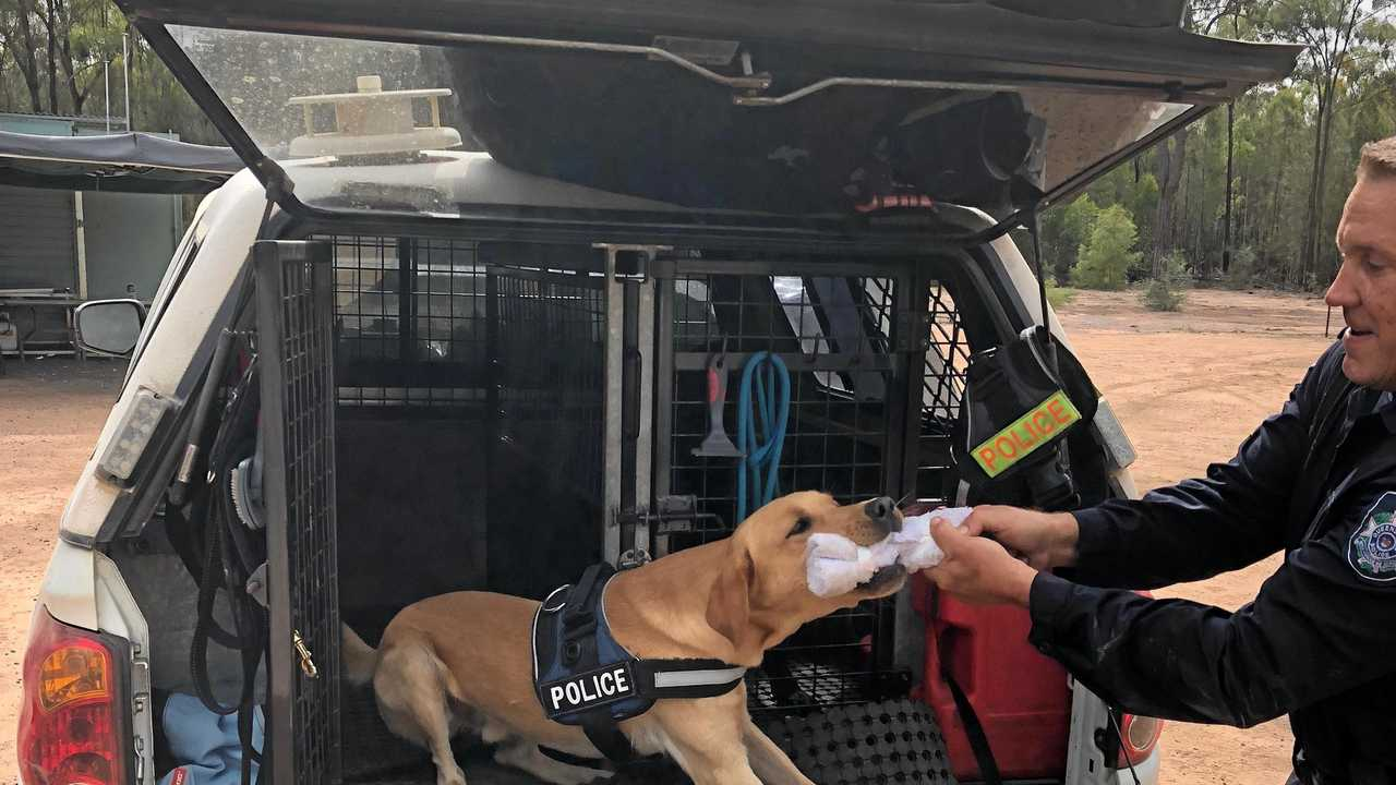 Ice plays with a toy after helping to uncover drugs and firearms. Picture: Contributed