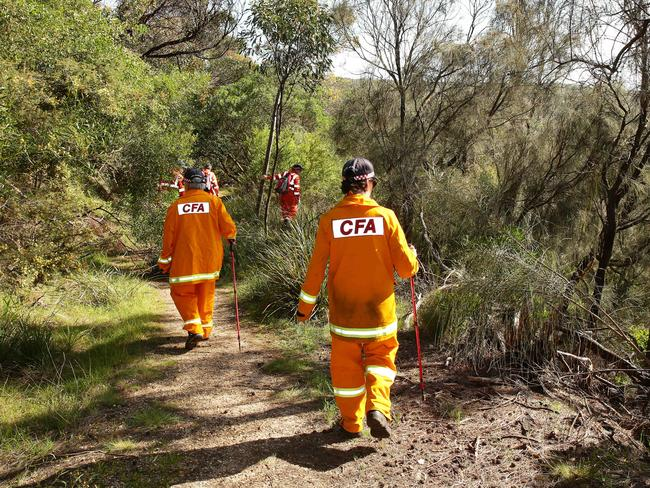 Emergency service crews search bushland at Urquhart Bluff near Aireys Inlet today for Elisa Curry. Picture: Alison Wynd