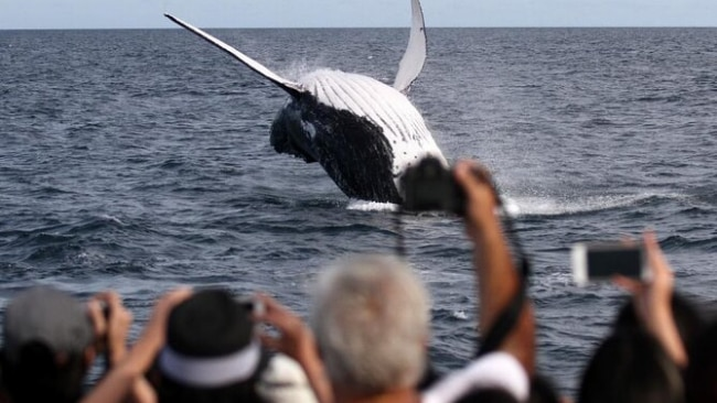 Spirit of Gold Coast Whale Watching 2.5 Hour Whale Watching Tour in Gold Coast