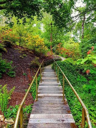 Mt Lofty Botanical Garden. Picture: MaryJane @mary._.jane1/Instagram.
