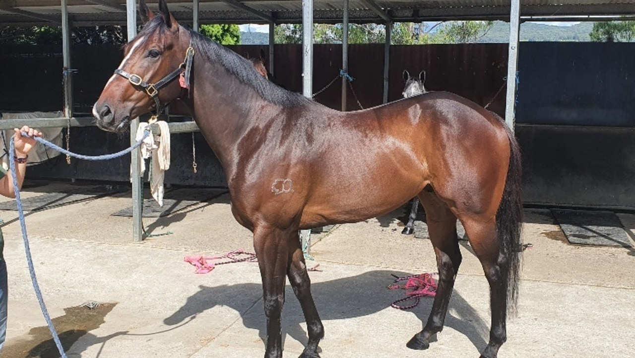 Rob Heathcote's Group 1 winner Rothfire at Washpool Lodge. Picture: Supplied