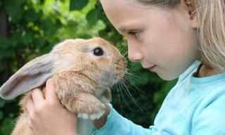How to care for a family pet rabbit