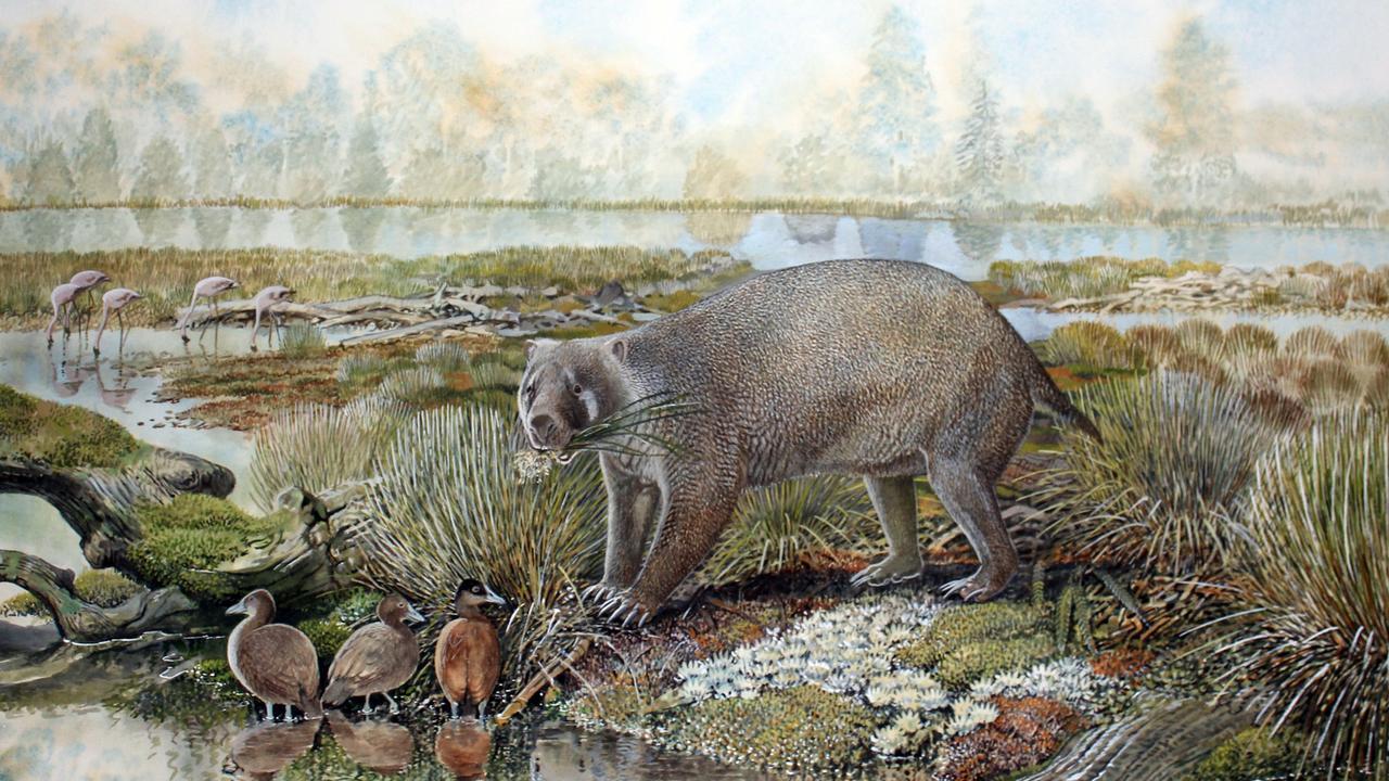 An artist's reconstruction of a giant wombat-like marsupial Mukupirna nambensis. Picture: AAP/Peter Schouten