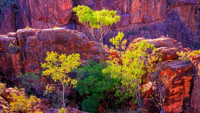 9/10 Boodjamulla National Park Properly remote -we're talking 1100 clicks from Cairns and nudging the NT border – Boodjamulla twists outback cliches on their dusty head. Named after the Rainbow Serpent in local Waanyi culture, it is riddled with waterways, gorges and freshwater crocs. If archeology is your jam, Riversleigh's Site D is home to fossils which are at least 15 million years old. That's even before Hey, Hey It's Saturday. Walkers are well catered to with trails that span 600 metres to seven kilometres. The Upper Gorge walk is the pick of the bunch but hopping a kayak is also a sublime way to experience the park. Costs: $6.85 per person per night, or $27.40 per family per night. Camping fees must be booked and paid for before you arrive. For more camping info, click here.