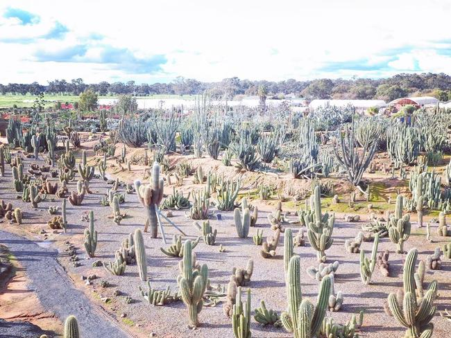 THE AMERICAS    AUSTRALIAN SWAP: Find cenotes, cities, pink lakes, whale sharks and the largest cacti garden in the Southern Hemisphere right here …
