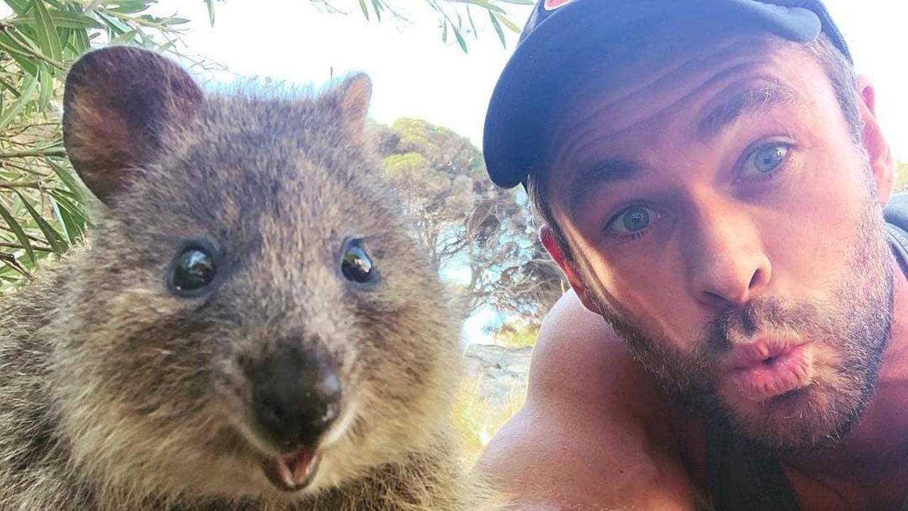 Unfortunately no Hemsworths will feature but the quokka certainly is. Picture: Instagram
