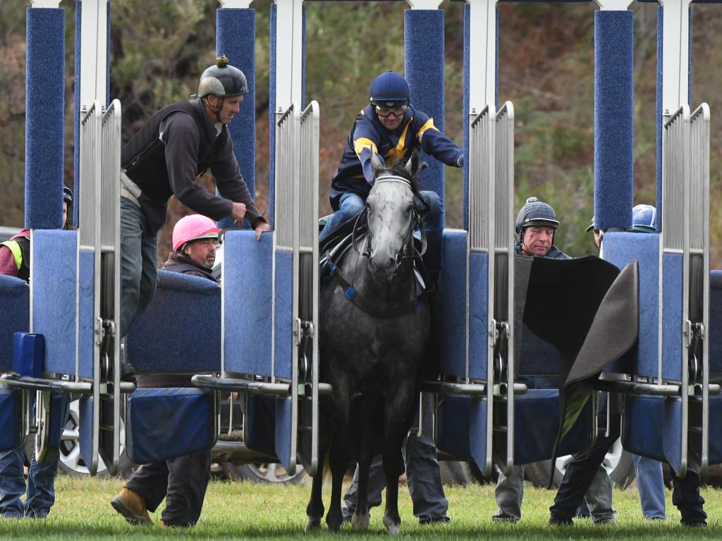 Chautauqua, with Dwayne Dunn on board, refuses to jump during a Cranbourne Barrier Trial in March.