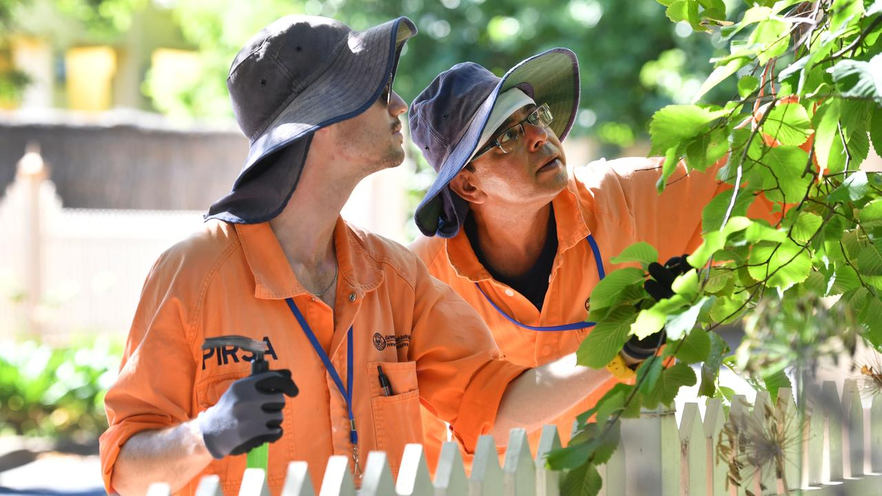 PIRSA biosecurity officers Joshua Dowsett and Saurin Barot check a fruit tree. Picture: Keryn Stevens
