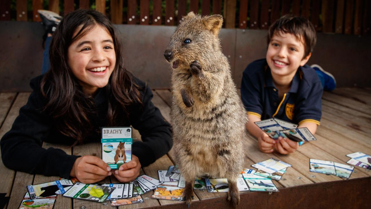 Finley, 11, and Cohen, 9, playing the ANiMOZ Trading Card Game with Kinta the Quokka on August 11 at the Adelaide Zoo. Picture: Matt Turner.