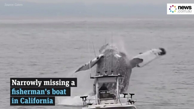 Humpback whale leaps from sea next to small fishing boat