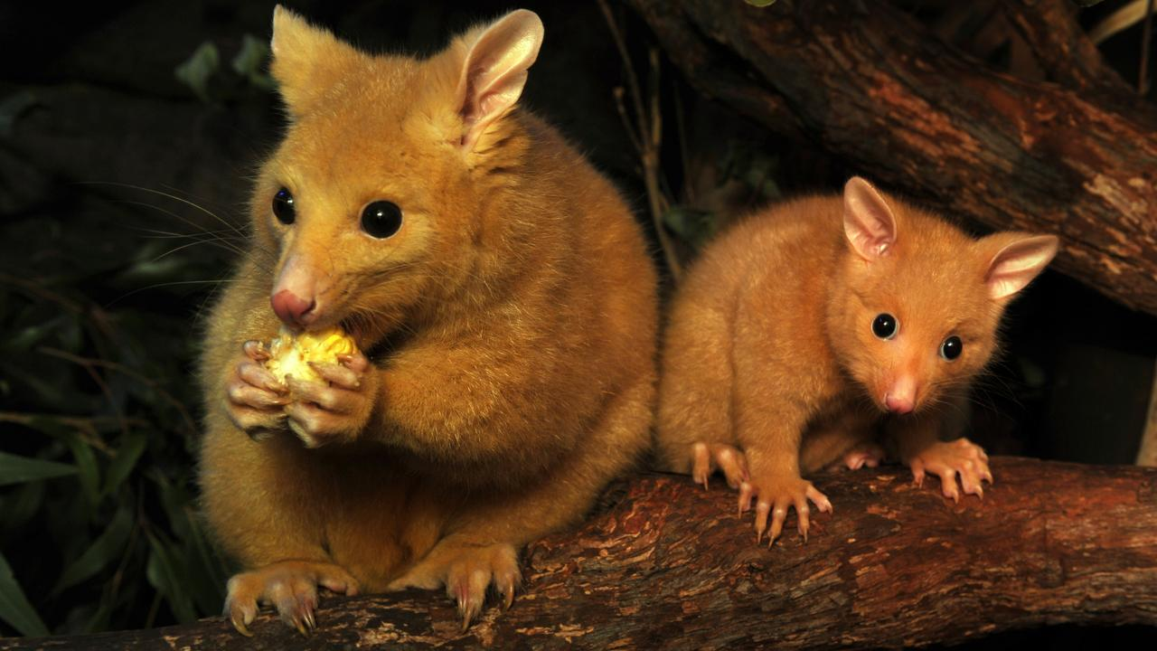 AUSTRALIA-CONSERVATION-WILDLIFE