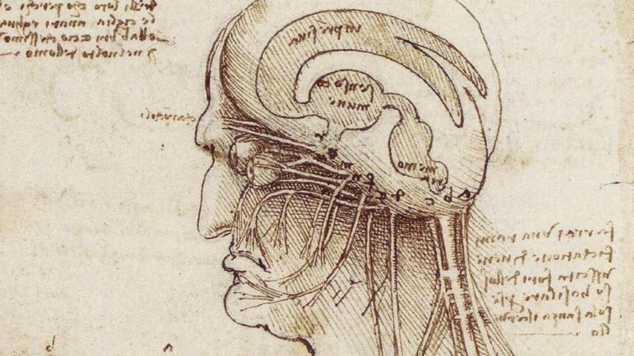 Leonardo Da Vinci Anatomy to Robots exhibition.