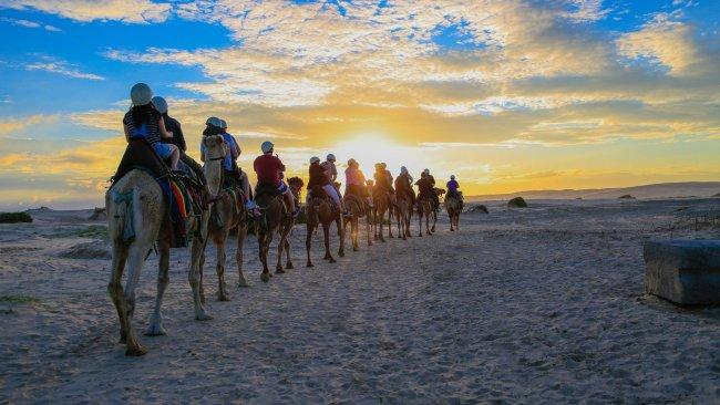 10/15Ride camels at Oakfield Ranch A veritable all-ages paradise, Port Stephens beckons in the school holidays with dolphin spotting, swimming, kayaking up the Myall River, cruises, 4WD tours, and sandboarding the largest shifting sand dunes in the southern hemisphere. For a more relaxed pace, spin around the Stockton Sand Dunes on camelback at Oakfield Ranch. The ranch offers 20-minute camel rides everyday — kids as young as two can ride during the day, or if everyone in your crew is over 10, you can enjoy an hour-long sunset ride.