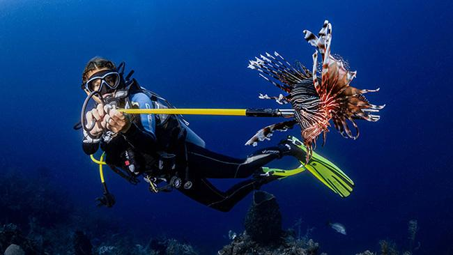 18/42Roatán Island, HondurasA diver spears a lionfish in Honduras' Roatan Marine Park, where the lionfish are an invasive species and are killed to decrease their negative impact on the reef. Picture: Stephanie DonigerOcean Art 2020