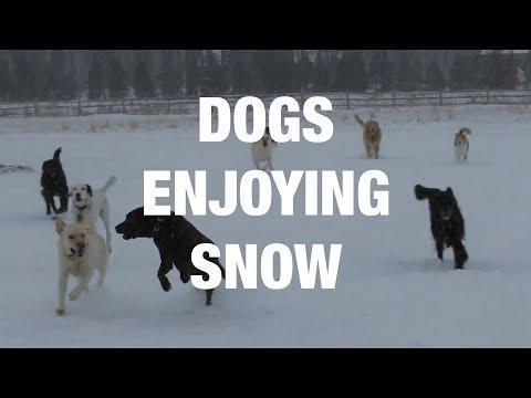 Ecstatic Dogs Enjoying Snow. Credit - Various via Storyful