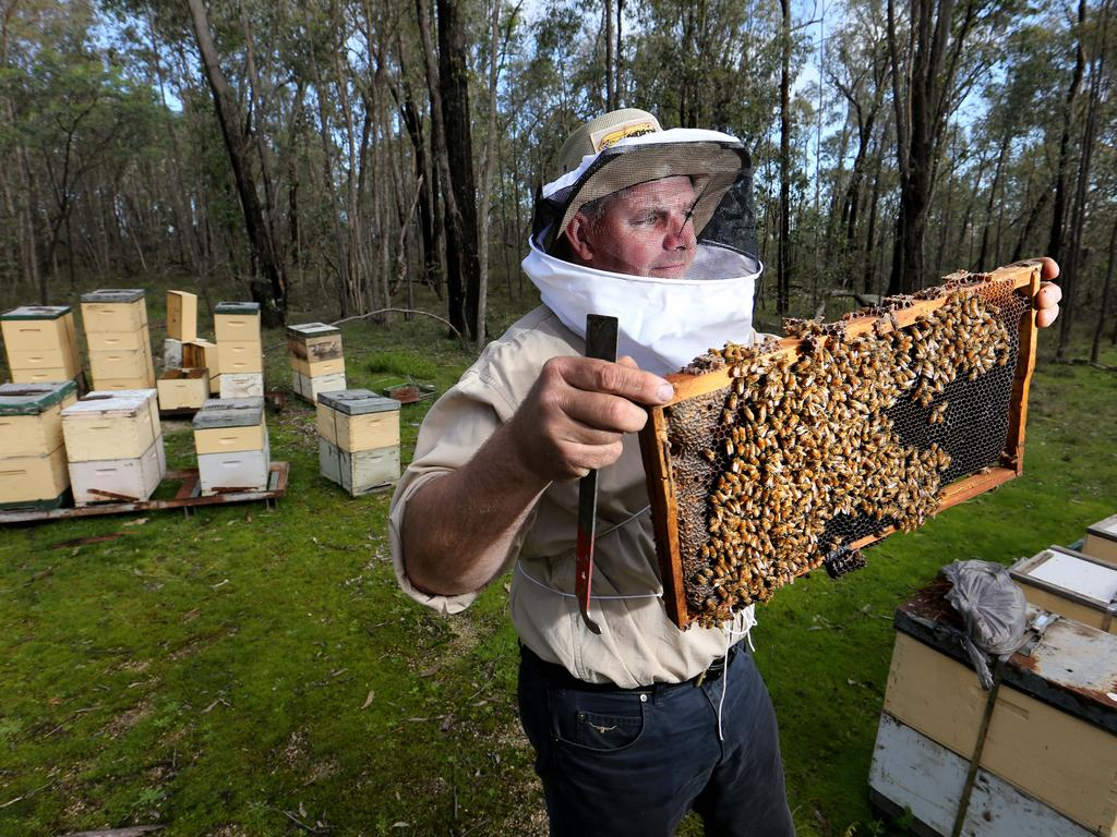 Steve Goldsworthy, Beekeeper and co-owner Beechworth Honey with his bee hives in the bush near Beechworth. Picture: Supplied