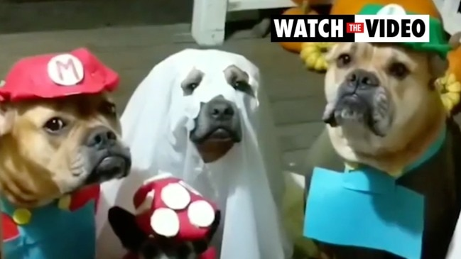 Group of rescue dogs completely nail Halloween looks