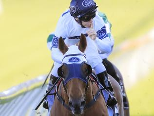 Horse Racing News and Thoroughbreds | Daily Telegraph