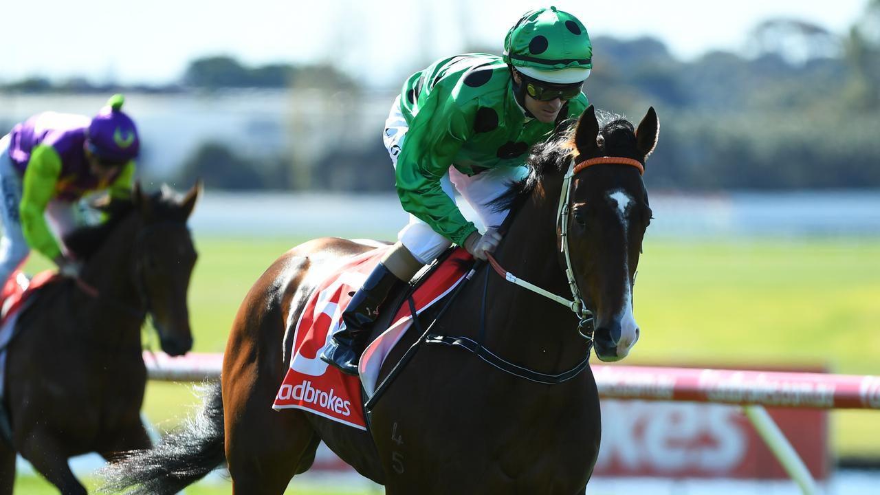 Black Caviar's son Prince Of Caviar scored his first win on Thursday at Bendigo. Picture: AAP