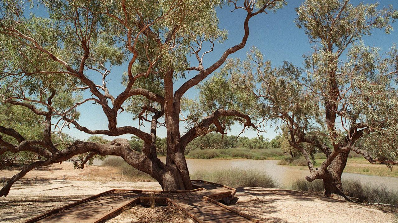Burke and Wills dig tree on banks of Cooper Creek, SA. /SA/Cooper/Creek