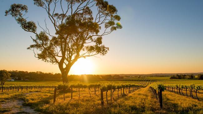 Vineyards in the Barossa Valley, Adelaide.