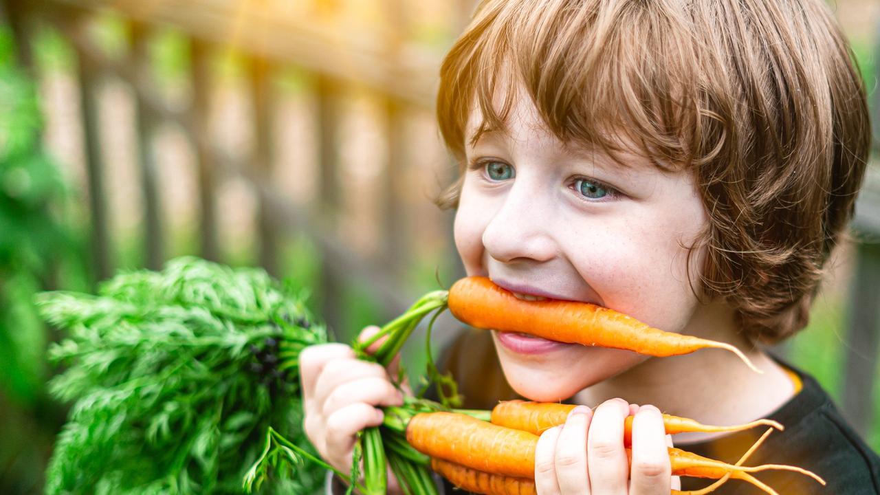 Cute kid boy at the farm eating fresh carrot. Open mouth