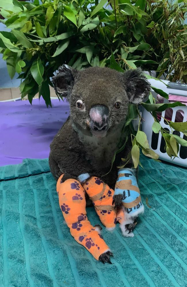 Peter today. Picture: Facebook/Koala Hospital Port Macquarie