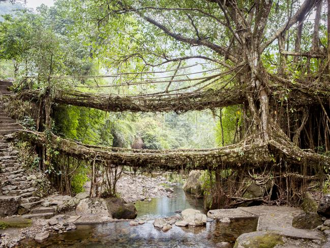 56. WALK ACROSS TREE ROOT BRIDGES IN INDIA It looks like they emerged from the pages of a fantasy novel, but these bridges formed by living root systems are a real-life phenomenon, found in India's north-eastern province of Meghalaya. The intertwined roots of these rubber trees are so strong, some can hold 50 people at once. They didn't form this way all on their own. Local tribespeople used branches to guide the roots across the rivers as they grew.   16 THINGS YOU HAVE TO SEE IN INDIA
