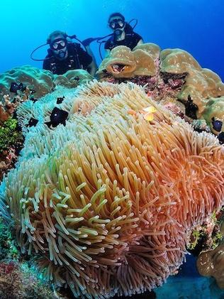 The island is surrounded by spectacular coral.