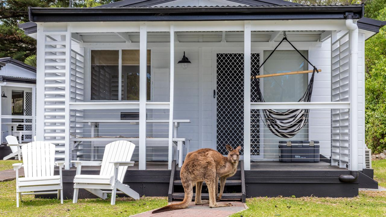 Kangaroo companions are guaranteed during a stay at The Cove, Jervis bay.