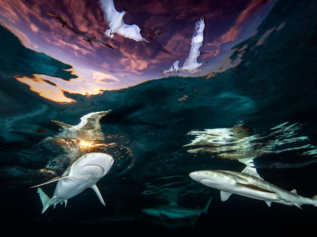 ONE TIME WEB USE ONLY - FEES MAY APPLY FOR REUSE - MUST CONTACT PHOTOGRAPHER DIRECTLY FOR REUSE - Underwater Photographer of the Year 2021 MUST CREDIT -