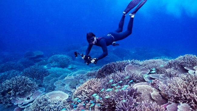 Johnny Gaskell on the Great Barrier Reef, Queensland.