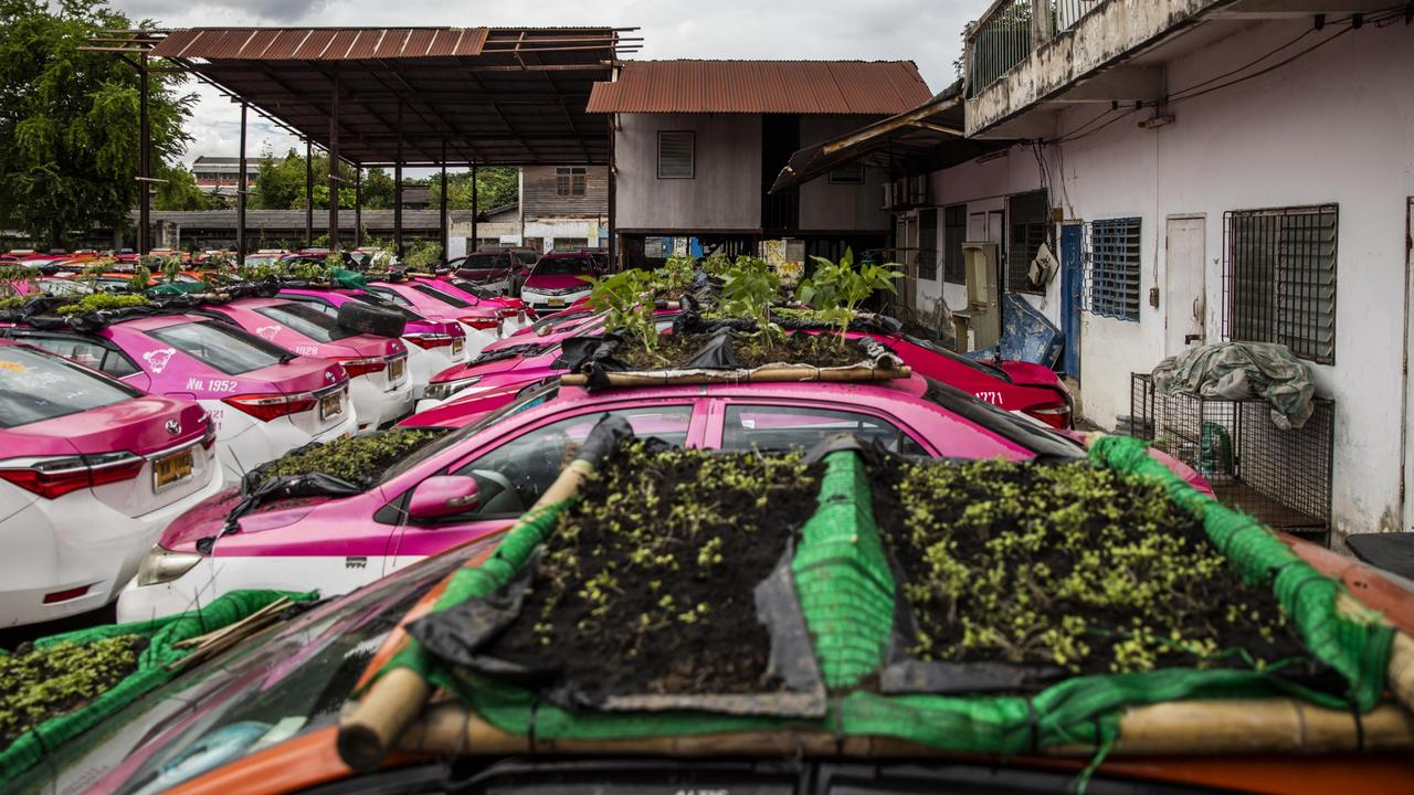 Taxi companies have seen a significant drop in business due to the lack of international tourism throughout the Covid-19 pandemic. The Ratchaphruek Taxi Cooperative's owners set up the community garden using disused taxis, growing vegetables to provide stress relief and food to their employees. Picture: Getty Images