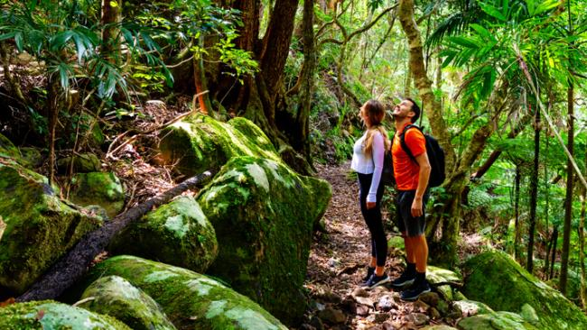 7/11Deep southGold Coast Hinterland Great WalkA lifetime away from the surfside glamour of the Gold Coast is a 54km trail that meanders along the rim of the ancient Tweed Volcano. In the rainforest-clad hills hikers will spot possums, sugar gliders, and tree frogs and keep an ear out for cockatoos and lyrebirds. Retreat from the heat and team up with Life's An Adventure for a four-day pack-free walk in comfort. Picture: Tourism & Events Qld