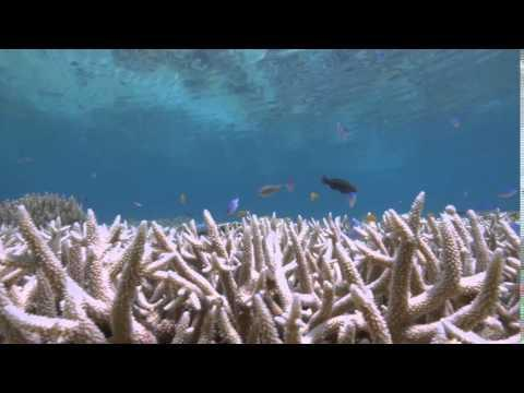 AU QLD: 2016 Record Worst Destruction of Corals at Great Barrier Reef March 01