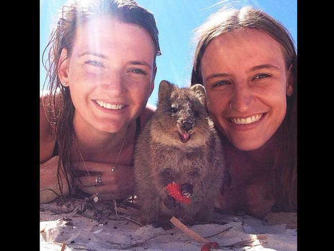 """Hay mate #quokka"" Picture: marty.h/Instagram"